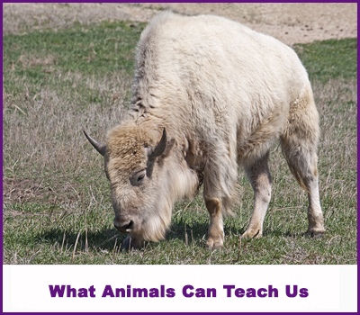 What Animals Can Teach Us Spiritually | Sherrie Wirth | Psychic Life Coach